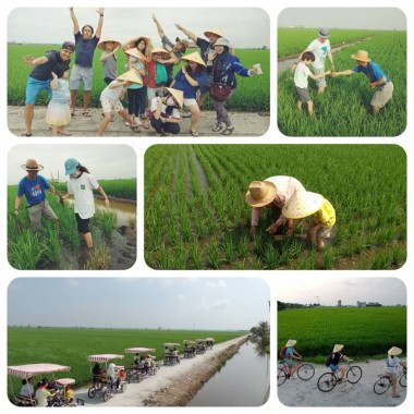 Cycling & Experience paddy field activities  with your family (whatsapp Tour Agent Mr Kok sang  016 335 9200  more details)