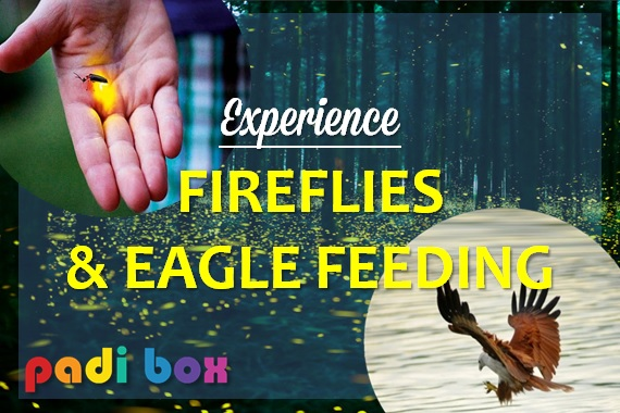 FIREFLIES AND EAGLE FEEDING (whatsapp us for more details)